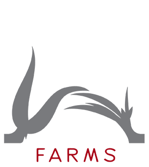 Angle Farms Logo Icon | Welborn Creative